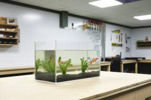 DIY acrylic aquarium result with fish