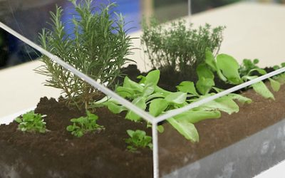 DIY mini greenhouse in 5 easy steps