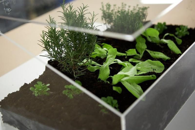 DIY mini greenhouse close up photo