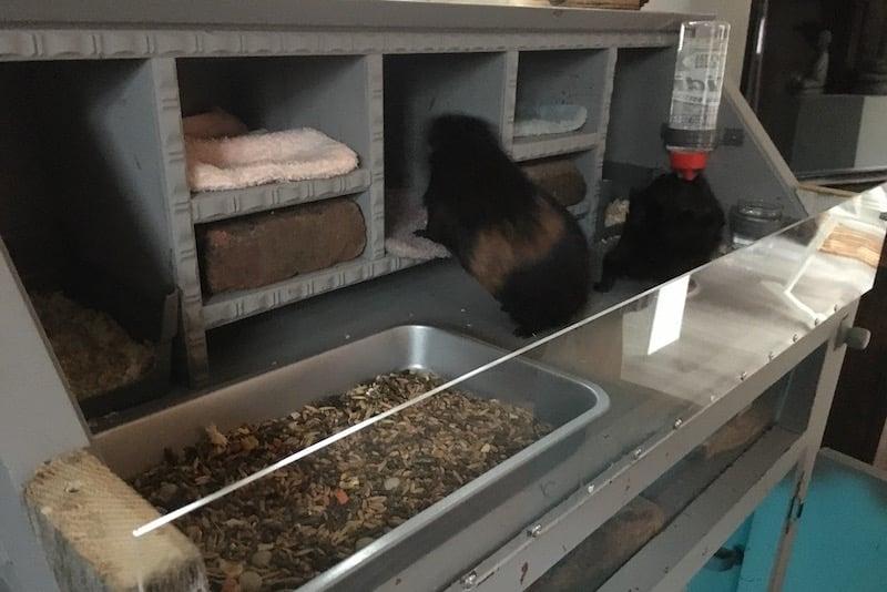 Make a guinea pig hutch
